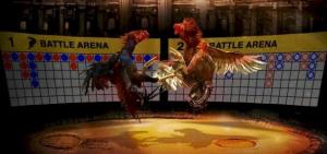 Cara Mengetahui Peluang pada Taruhan Sabung Ayam Online
